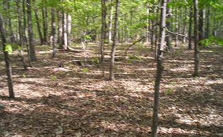 Wilderness Battlefield