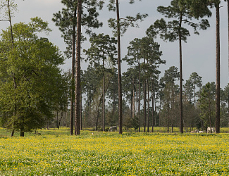 Meadow at Big Thicket National Preserve
