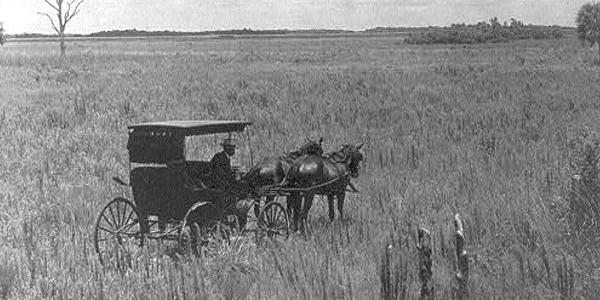 Everglades in 1905