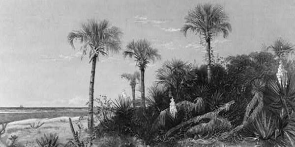 Coast of Florida