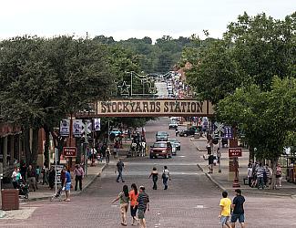 Longhorns at Fort Worth Stockyards