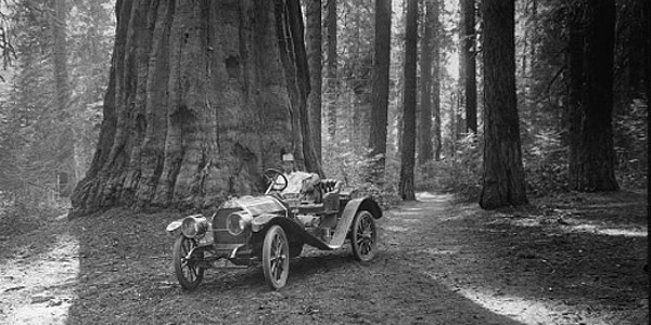 Car Driving Through Giant Redwood at Sequoia National Park