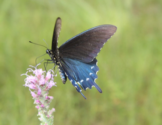 Butterfly at Big Thicket National Preserve