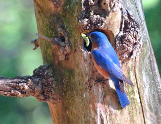 Bird along the Chattahoochee River
