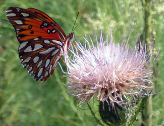 Butterfly at Chattahoochee River NRA