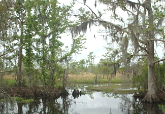 Jean Lafitte NHP and Preserve