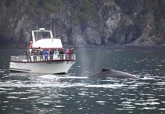 Kenai Fjords Whale Watching