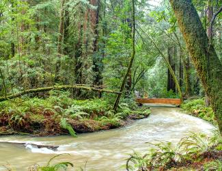 Muir Woods Bridge over Redwood Creek