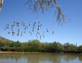 Birds and water at Organ Pipe Cactus NM