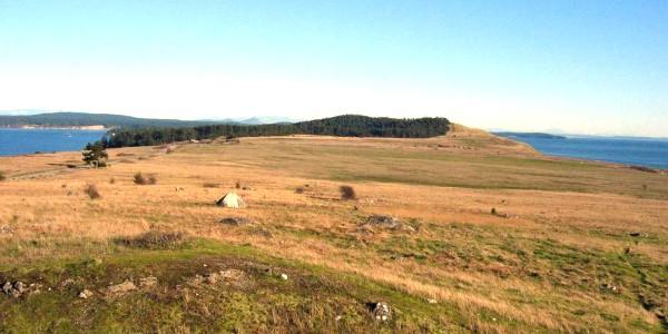 Prairie at American Camp, San Juan Islands