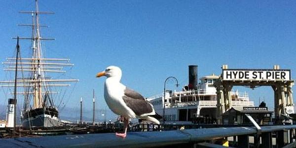 Gull at Hyde Pier, San Francisco