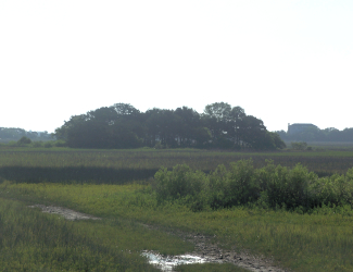 Site of Fort Mose