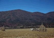 Farm scene in the Shenandoah Valley