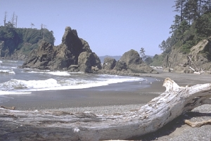 Pacific Coast in Olympic National Park